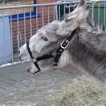 Kerstmarkt Doesburg 2012 2012  16