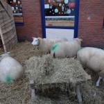 Kerstmarkt Doesburg 2012 2012  39